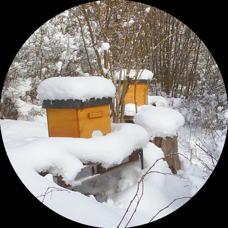 Winter Hochwaben-magazinbeute